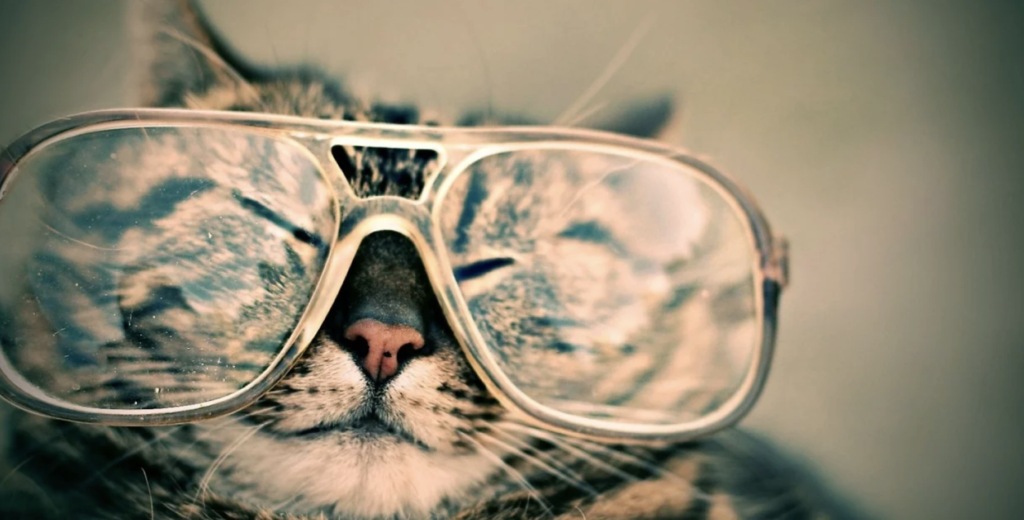 Choisir des lunettes
