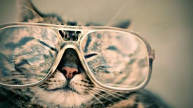 Photo of Comment bien choisir ses lunettes ?